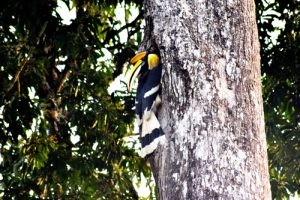 Birdwatching in Valparai Hornbill castle Activities